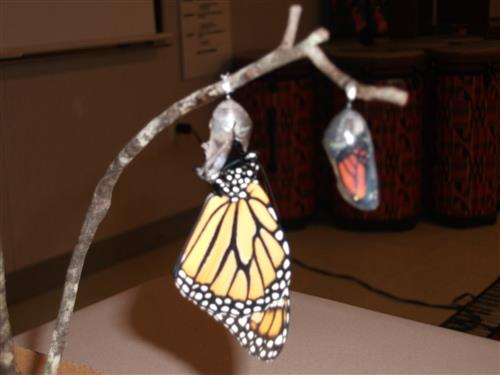 Emerging butterflies and a song about their journey made for a great science infused Music lesson.